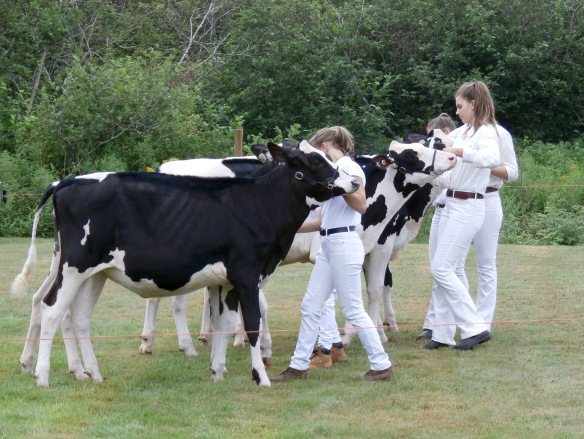 Annual 4-H Show, Brook Village, Cape Breton